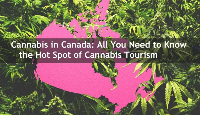 cannabies canada all you need to know